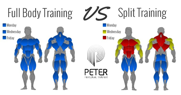 Full-body-vs-split